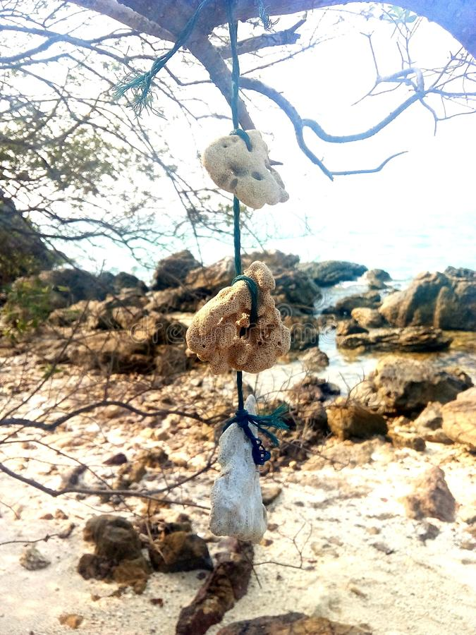 Утесы которые связывают древесину на пляже стоковая фотография rf