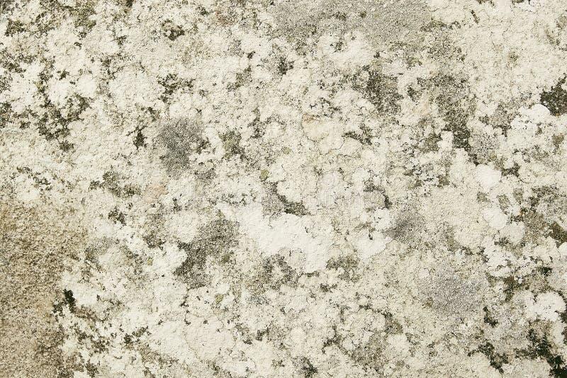 Утес гранита серого цвета с текстурой предпосылки мха стоковое изображение rf