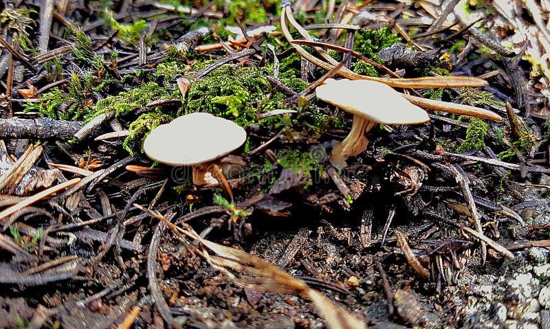 Утес гриба стоковые изображения rf