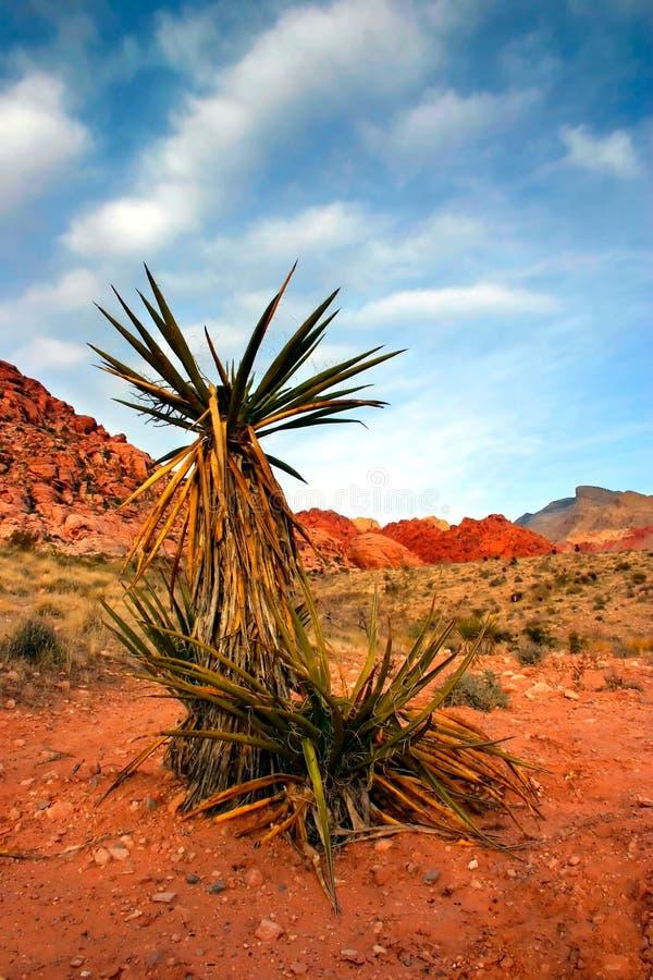 Download утес красного цвета Невады каньона Стоковое Фото - изображение насчитывающей красно, гора: 481660