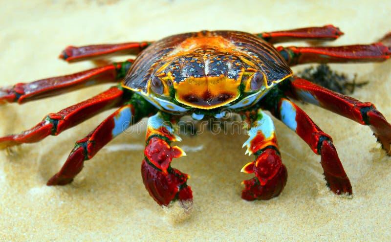 утес красного цвета рака пляжа стоковая фотография