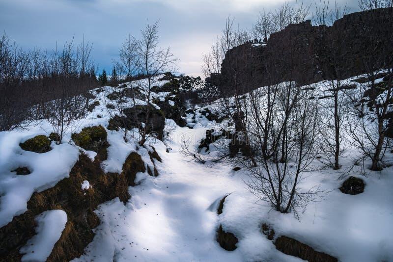 Утес лавы и высушенное coverd деревьев снегом, тектоническими плитами  стоковое изображение