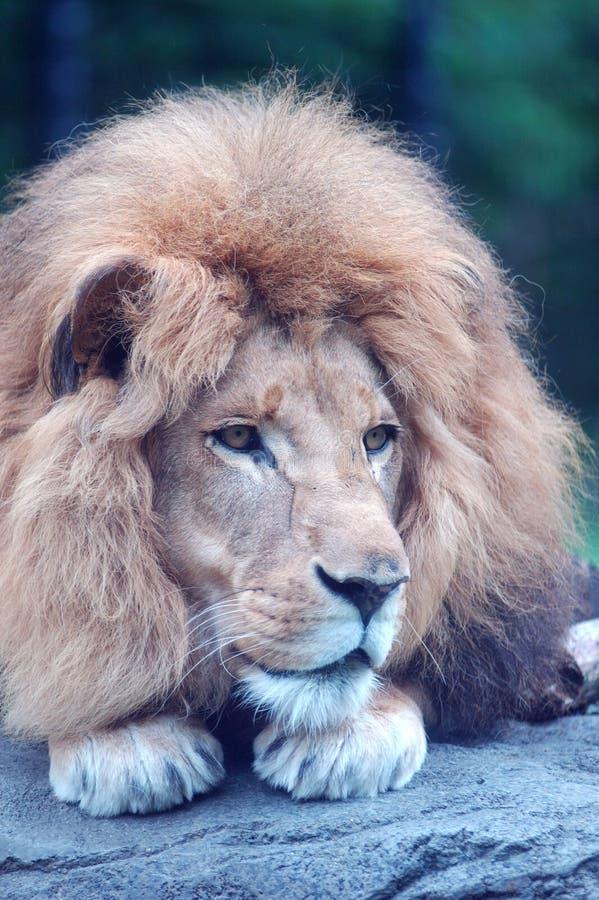 утес льва стоковая фотография