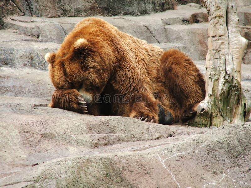 утес медведя стоковое фото