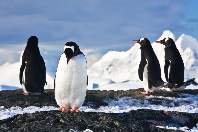 утес пингвинов Антарктики стоковое фото