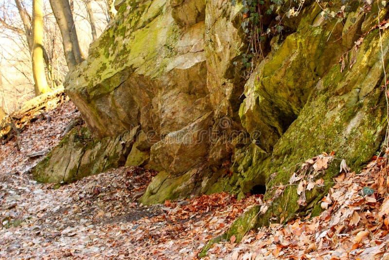 Утес, leafe и дерево в лесе стоковое фото