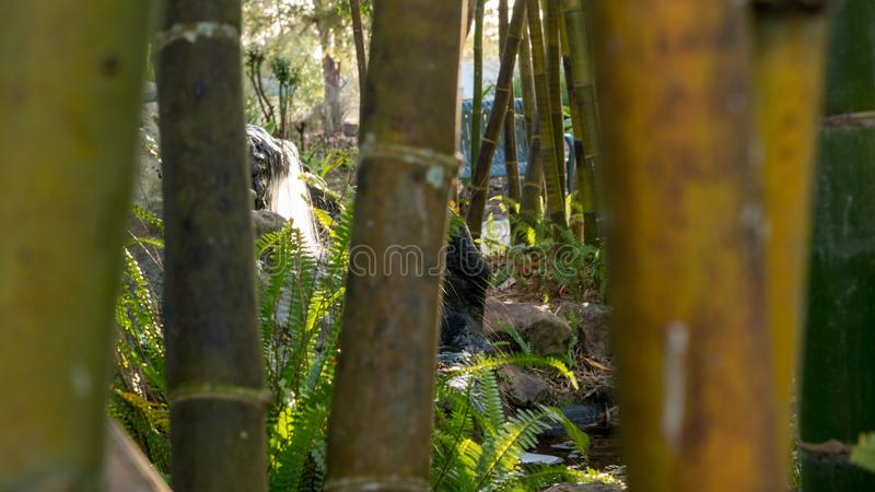 Утихомиривая водопад через бамбук стоковые изображения rf