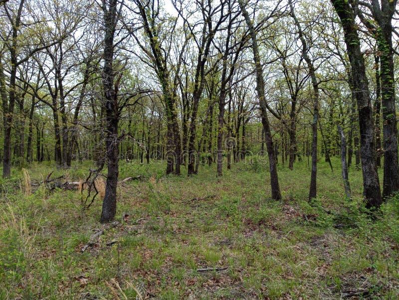 Утихомирите как смогите находиться под большими старыми тенистыми деревьями стоковое изображение
