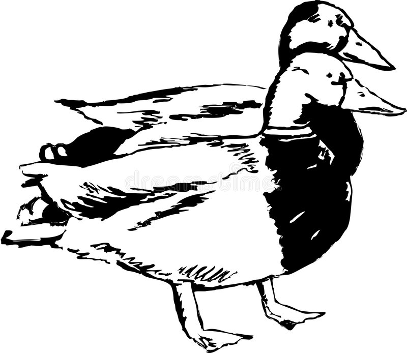 утка пар бесплатная иллюстрация