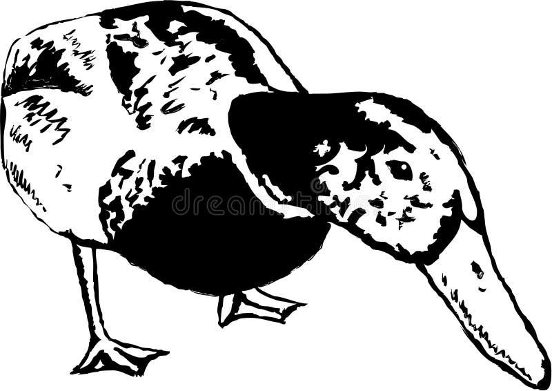 утка иллюстрация вектора