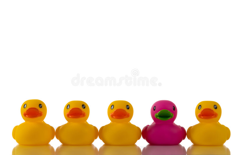 утка ducks розовый пурпуровый резиновый желтый цвет стоковое фото rf