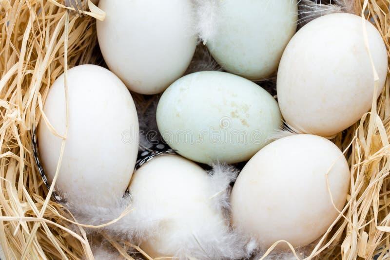Утка eggs гнездо, символ пасхи весны стоковое фото