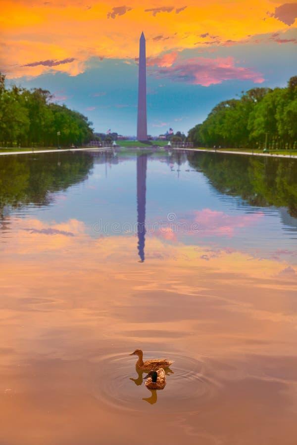 Утки и бассейн восхода солнца памятника Вашингтона стоковое фото rf