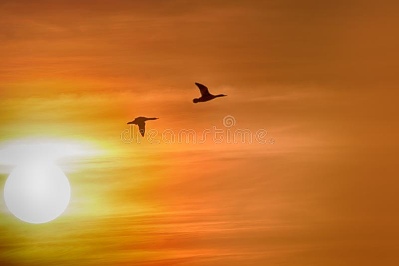 Утки летания против драматически неба захода солнца стоковое изображение rf