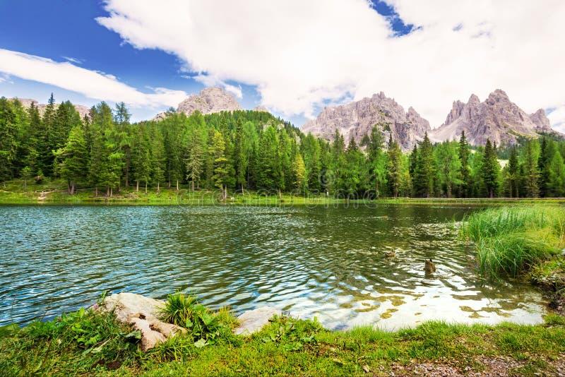 Утки на озере Lago Antorno с взглядом к доломитам, Италией стоковое изображение