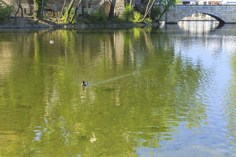 Утки плавая в пруде перед Vajdahunyad рокируют в бутоне стоковое изображение rf