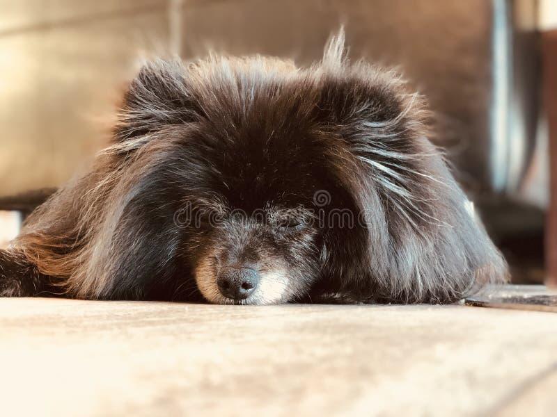 утомлянная собака стоковое изображение