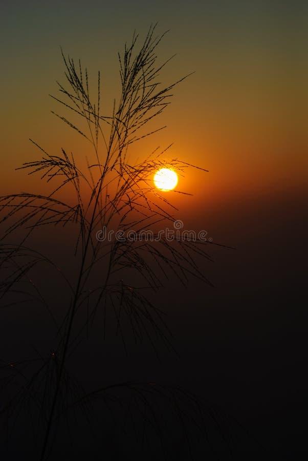 Утро восхода солнца стоковые фотографии rf