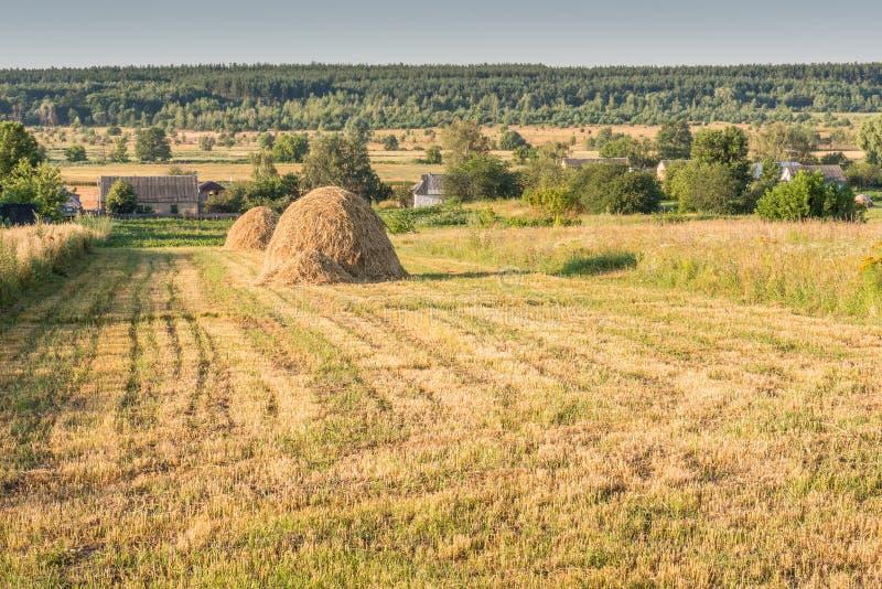 Утро лета в деревне стоковое фото