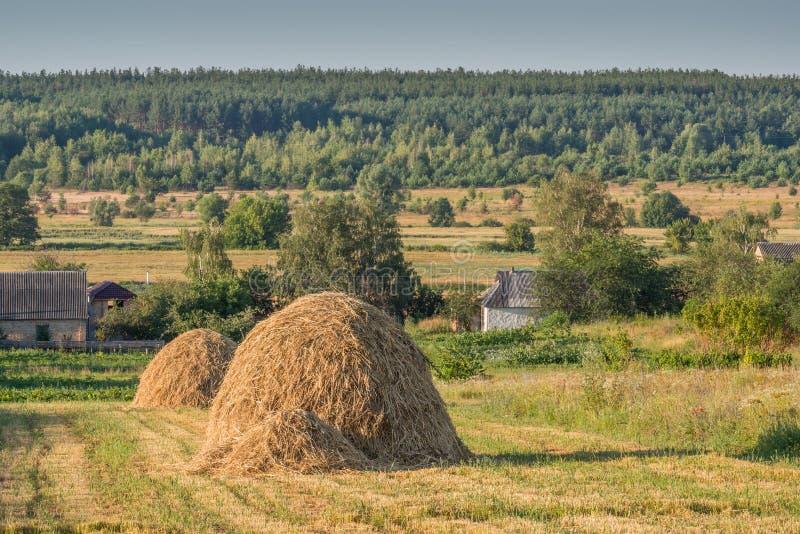 Утро лета в деревне стоковая фотография rf