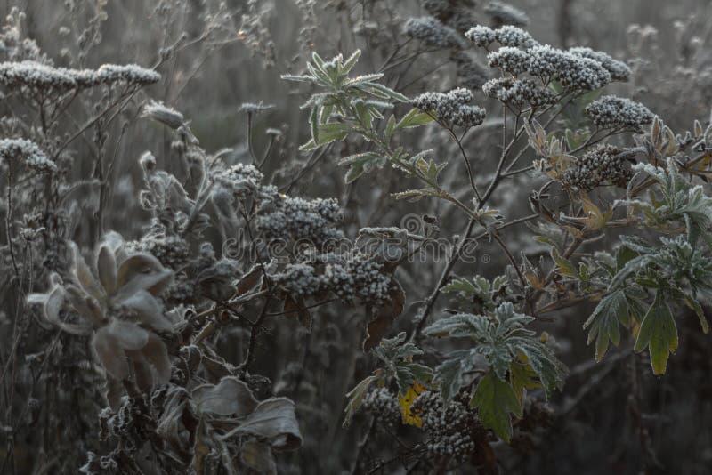 Утро замерзая на ветвях заводов в поле стоковое изображение rf