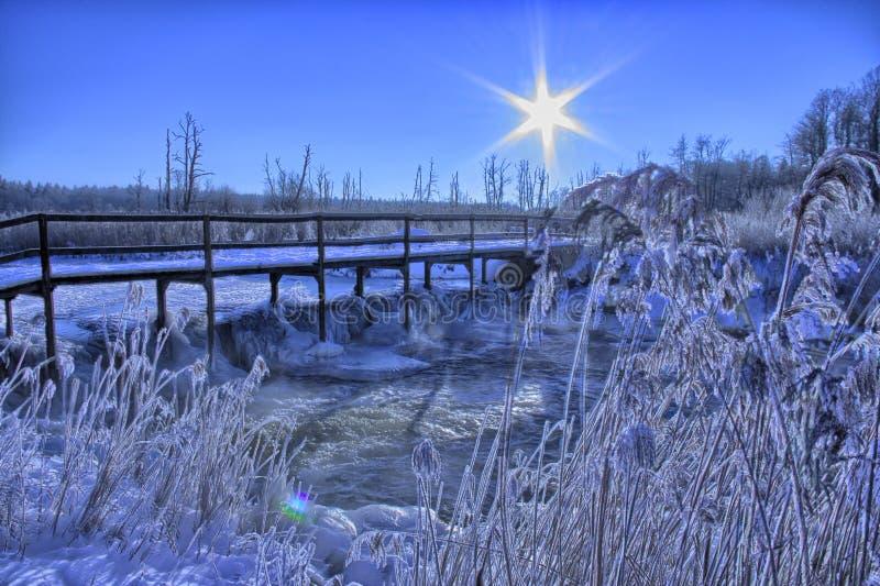 Утро зимы стоковая фотография