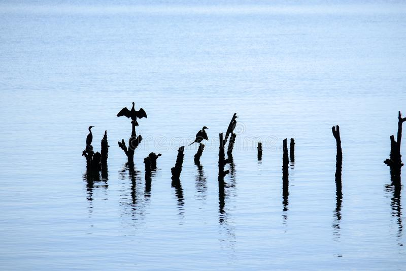 Утро начала новой жизни животных живя в этом море там разнообразие экосистемы и образы жизни в thi стоковые фото