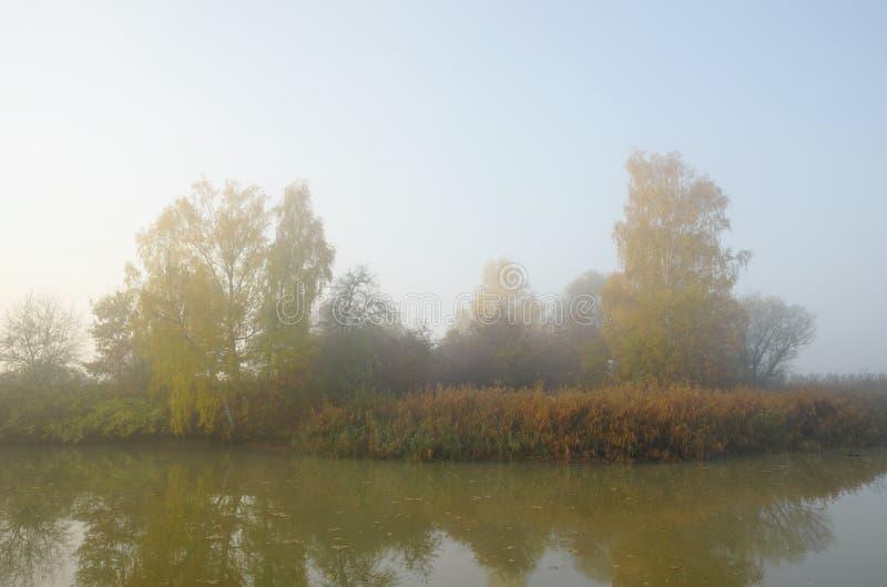 Утро на пруде стоковые изображения rf