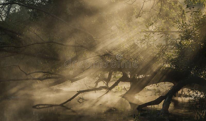 Утро на реке стоковое фото rf