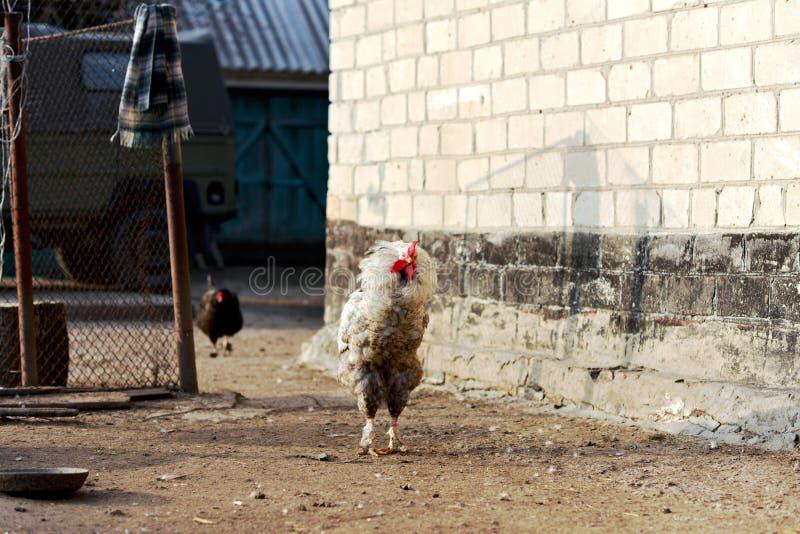 Утро на ферме стоковая фотография rf