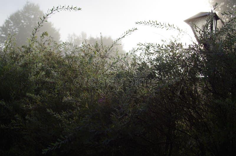 Утро осени в саде стоковые фото
