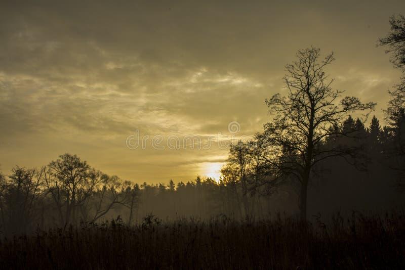 Утро осени стоковое изображение