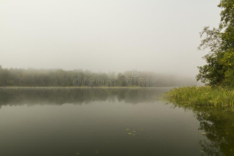 Утро раннего лета на туманном озере стоковая фотография rf