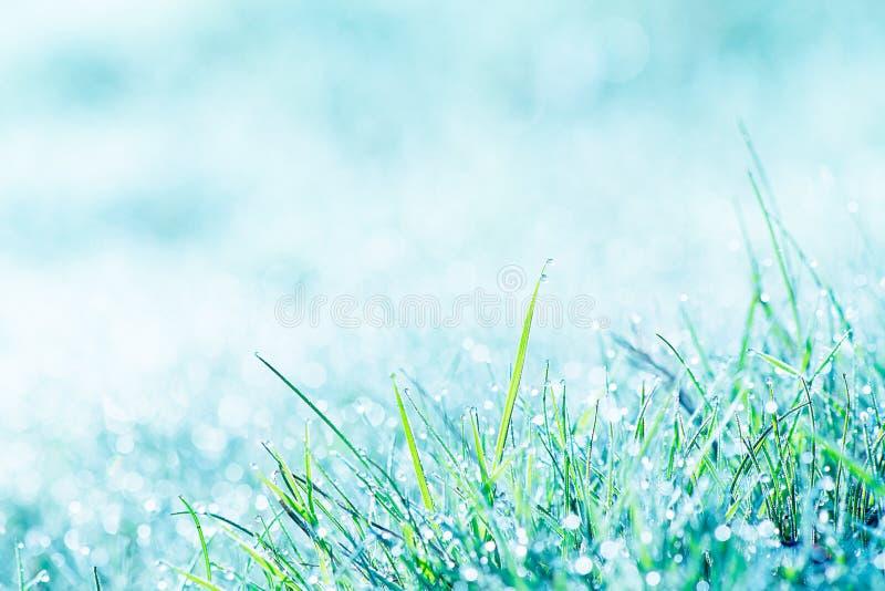 Утро, трава и налет инея стоковые изображения