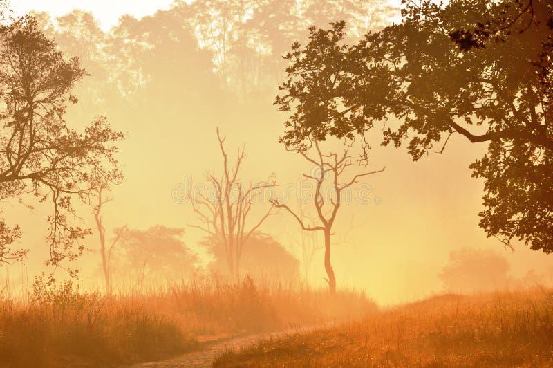 утро тумана стоковое изображение rf