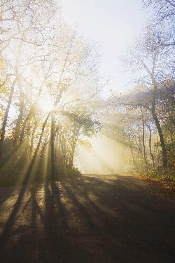утро лужка тумана над водой стоковое изображение