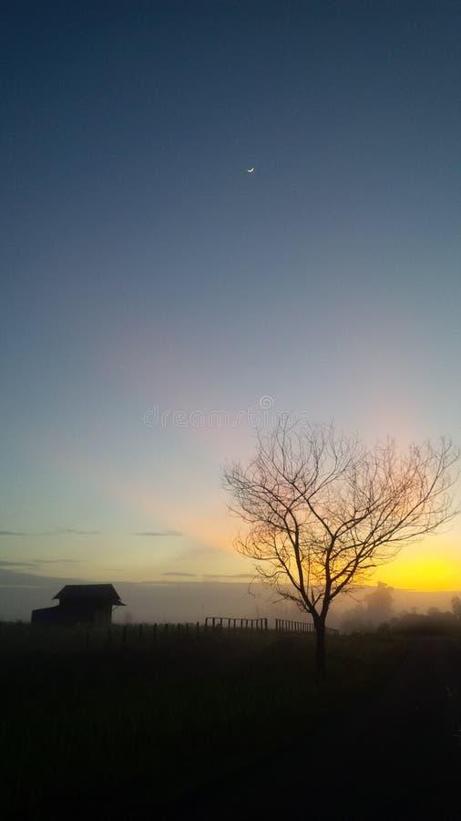 Утро стоковая фотография