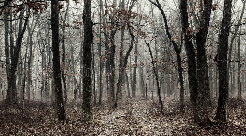 Утро BW черно-белое в листве леса осени леса осени яркой стоковое изображение
