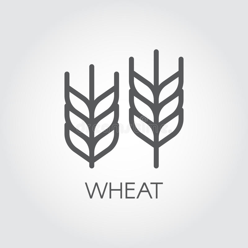 Ухо значка плана пшеницы Концепция земледелия и сбора Конструируйте элемент для темы пива, различной упаковки и продуктов Vecto иллюстрация вектора