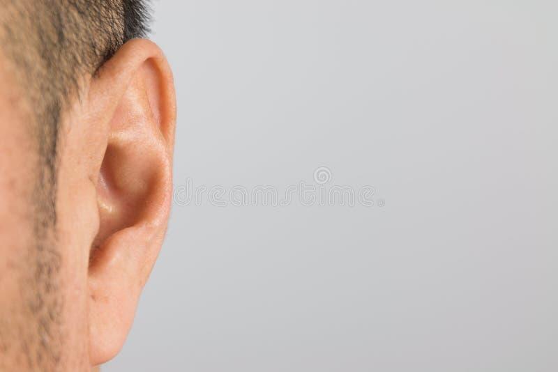 Ухо человека стоковые фото