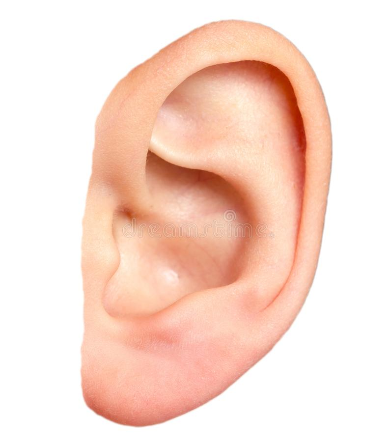картинки уши на прозрачном фоне виновник торжества