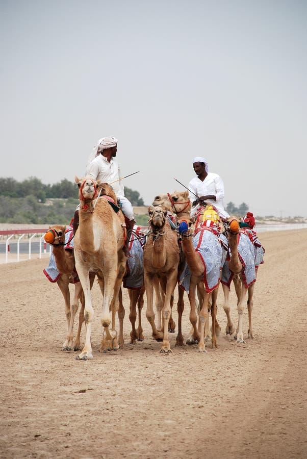 Участвовать в гонке верблюда стоковое изображение