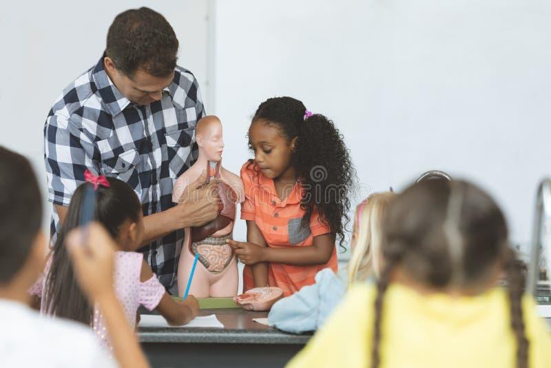 Учитель держа фиктивный скелет пока школьница касаясь его легким стоковое изображение