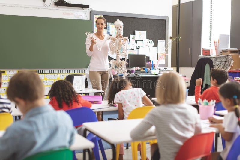 Учитель объясняя спасибо человеческого тела детей школы фиктивный человеческий скелет стоковая фотография rf