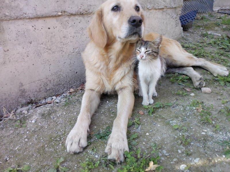лучшие други собаки и кошки стоковые фото