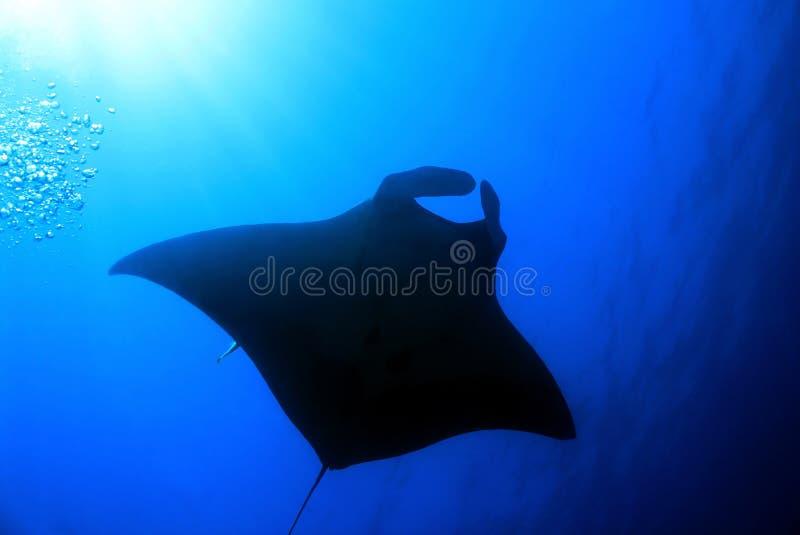 луч океана manta Мальдивов atoll addu индийский стоковое фото