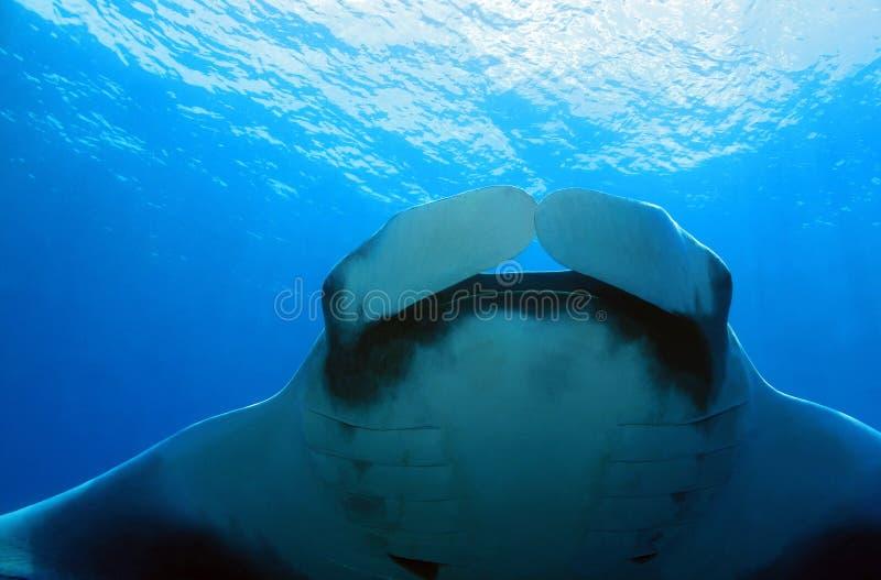 луч океана manta Мальдивов atoll addu индийский стоковые фотографии rf
