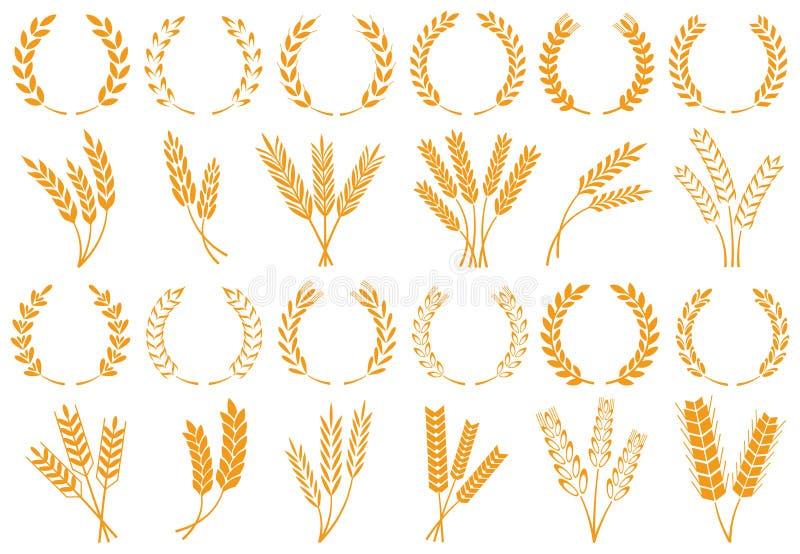 Уши пшеницы или ячменя Зерно пшеницы сбора, черенок риса роста и набор вектора зерен хлеба изолированный иллюстрация штока