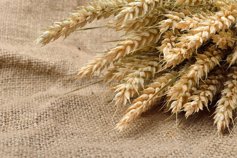 Уши пшеницы над предпосылкой мешковины с космосом экземпляра Bac холста стоковая фотография rf