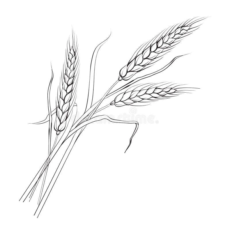 Уши пшеницы. иллюстрация штока